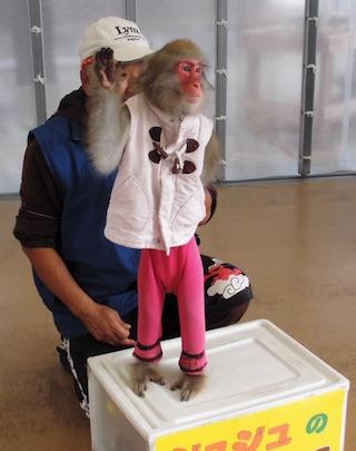 猿のショー